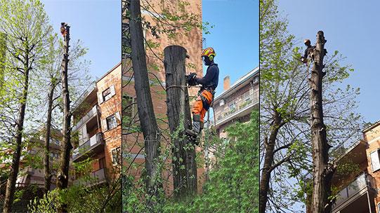 potatura alberi alto fusto con metodo tree climbing